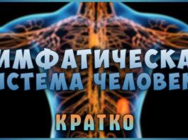 Лимфатическая система — главная в очищении организма
