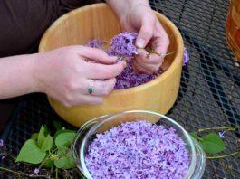 Успейте в самый пик цветения: заполни литрушку растительным маслом и фиолетовыми цветками…
