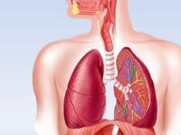 Недолгое голодание перезапускает иммунную систему и восстанавливает организм