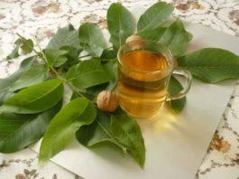 В борьбе с болезнями приведут к успеху листья грецкого ореха. В мае и июне собираем и здоровье укрепляем