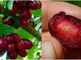 Эти ягоды спасают от самого коварного недуга. Восстанавливают организм и помогают всегда быть в тонусе
