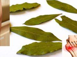 Лавровый лист – настоящее домашнее лекарство от варикоза, мигреней и проблем с памятью