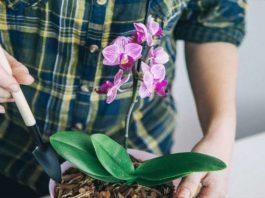 Орхидеи цветут как неукратимые. А все благодаря необычному поливу